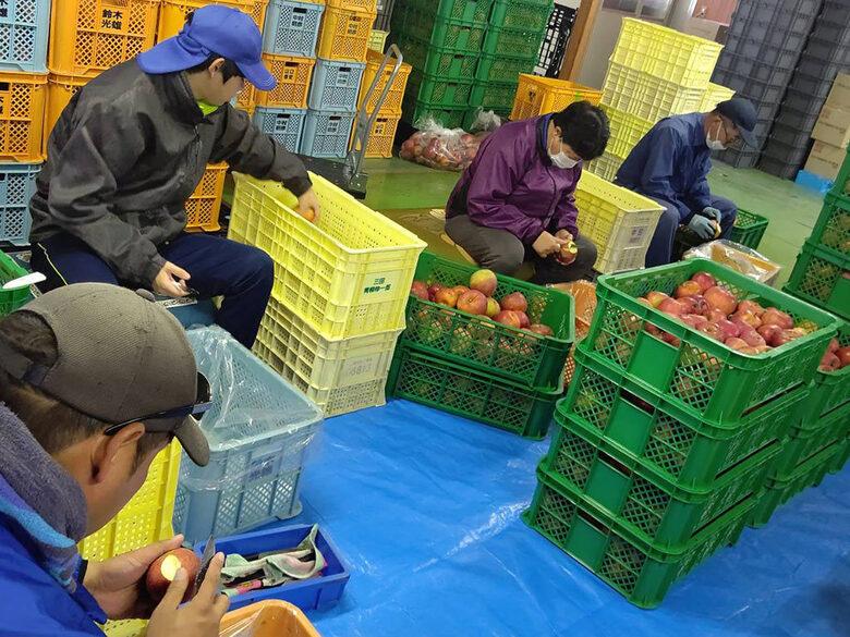 【活動報告】ワイナリーでのリンゴのお手伝い
