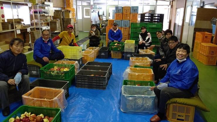 【活動報告】ワイナリーでのリンゴのお手伝い01