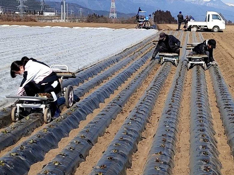 【活動報告】農作業のお手伝い