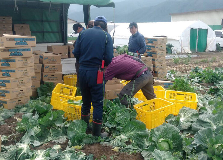【活動報告】高原野菜収穫のお手伝い01